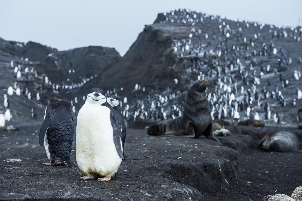 Antarctica Sanders Island