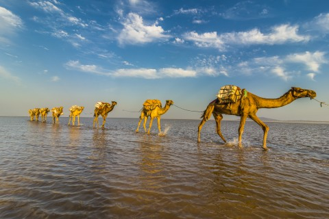 Down the Danakil Depression