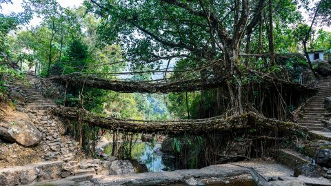 Maghalaya and the Living Bridges