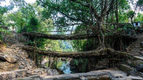 Maghalaya and the Living Bridges